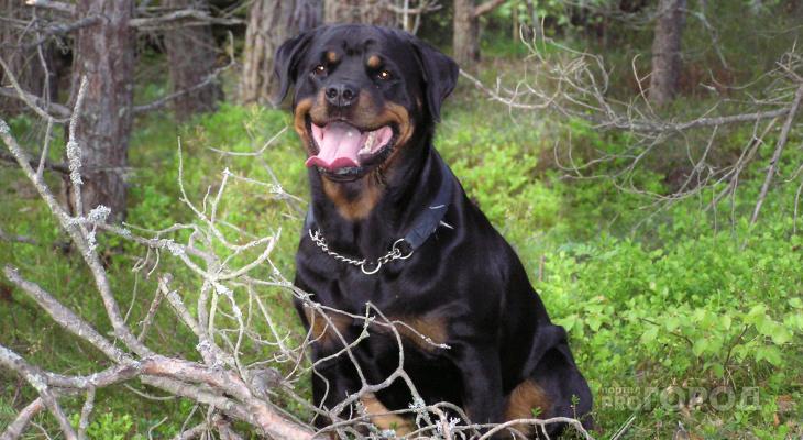 На хулигана из Дзержинска, стрелявшего по собакам, возбудили уголовное дело