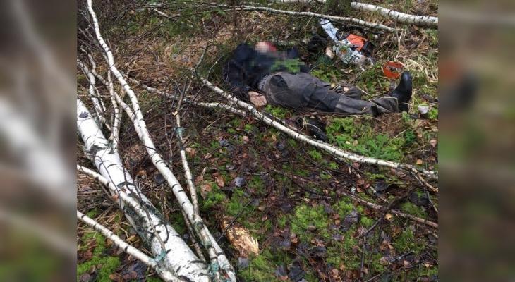 Рабочего раздавило деревом на лесозаготовках в Навашино