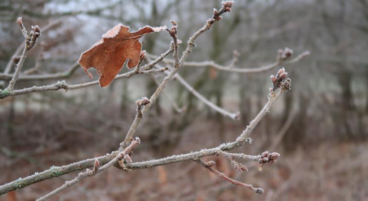 Зима нечаянно нагрянет: синоптики рассказали, какой дзержинцам ждать погоды