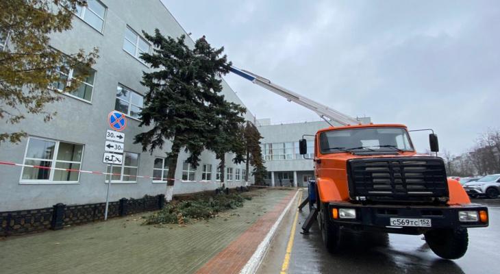 Часть деревьев у дзержинской администрации уберут