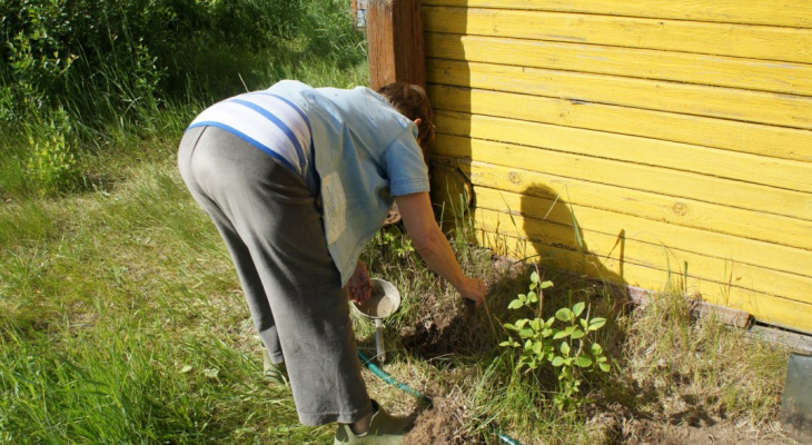Садоводам напомнили о наказании за выращивание семян петрушки