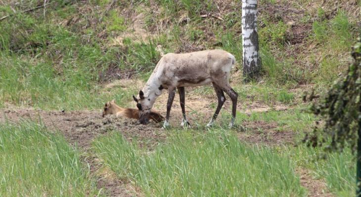 Диких животных стало больше в Нижегородской области